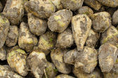 Closeup of sugar beets — Stock Photo