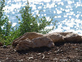 Closeup stones on the background of sea — Stock Photo