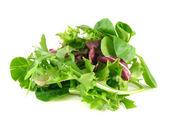 Salad rucola, frisee, radicchio and lamb's lettuce — Stock Photo
