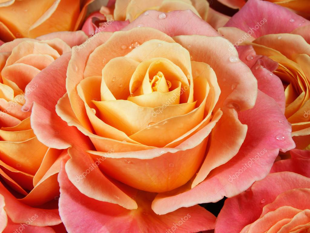 Bouquet Bridal: January 2011   Orange And Pink Roses