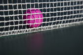 Balle de tennis de table rose — Photo