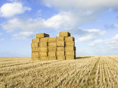 Stack of straw bales in field — Stock Photo