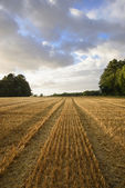Harvested wheat field in evening sunlight — Stock Photo