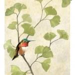Hummingbird in ginko tree — Stock Photo