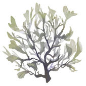 Green tropical seaweed — Stock Photo