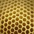 Inside of apiary - Foto Stock