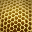 Inside of apiary - Stock Photo