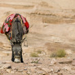 Bedouin donkey — Stock Photo #25713151