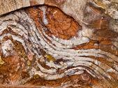Textures in Petra, Jordan — Stock Photo