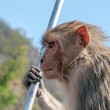 Profile of the monkey — Stock Photo