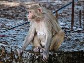 Monkey — Photo