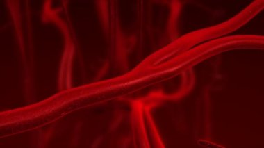 Human blood arteries and veins zoom in. — Stok video