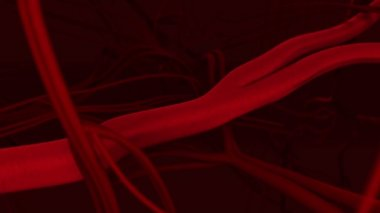 Human blood arteries and veins — Stok video