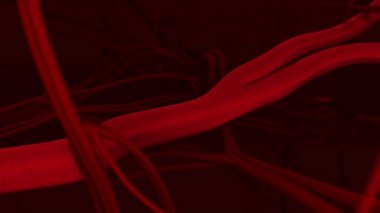 Human blood arteries and veins — Stock Video