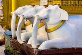 White elefants at Shwedagon Pagoda — Stock Photo