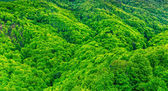 Hills and forests, — Stock Photo