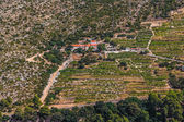 Dingac wijngaarden op peljesac schiereiland — Stockfoto