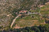 Dingac vineyards on Peljesac peninsula — Stock Photo