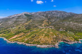 Dingac vineyards on Peljesac peninsula — Stock Photo