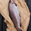 Rainbow trout (Oncorhynchus mykiss) — Stock Photo #27104165