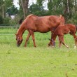 Photo: Baby horse and mare equine