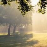朝の日差しが降り注ぐ — ストック写真
