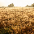 Meadow in the dew into a sunny day — Stock Photo