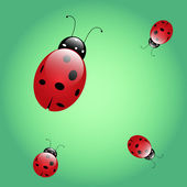 Ladybird beetle — Stock Vector