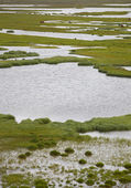 Swampy landscape Iceland — Stock Photo