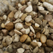 Small beach stones and sand river — Stock Photo