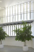 Modern building interior with green plants — Stok fotoğraf