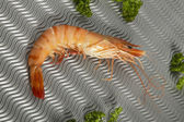 Coocked shrimp on a metallic background — 图库照片