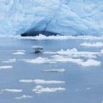 Perito Moreno glacier and icebergs. Argentina — Stock Photo #47737111