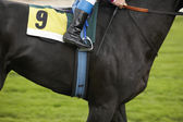 Race horse with number nine ready to run — Stock Photo