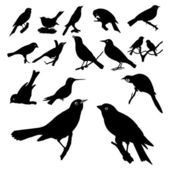 Collection of bird silhouettes — Stock Vector
