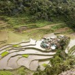 Flooded rice terraces — Stock Photo