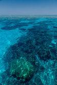 Reefs in australia — Stock Photo