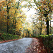 Road with green and gold forest trees — Stock Photo