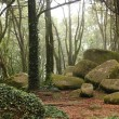 Green forest trees with huge rocks — Stock Photo