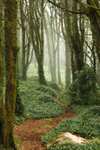 Path in green forest trees with huge rocks — Stock Photo