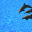 Three dolphins — Stock Photo