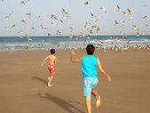 Boys chasing birds — Stock Photo