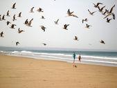 Boys chasing birds — Stock Photo