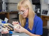 Technicien de laboratoire dentaire appliquant la porcelaine au moule de dentition — Photo
