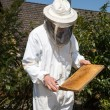 Royalty-Free Stock Photo: Beekeeper caring for bee colony