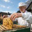 Beekeeper caring for bee colony — Foto Stock