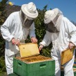Stock Photo: Two beekeepers maintaining bee hive