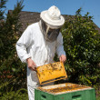 Beekeeper caring for bee colony — Stock Photo #25590021