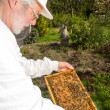 Beekeeper caring for bee colony — Stok fotoğraf