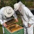 Two beekeepers maintaining bee hive — Foto Stock